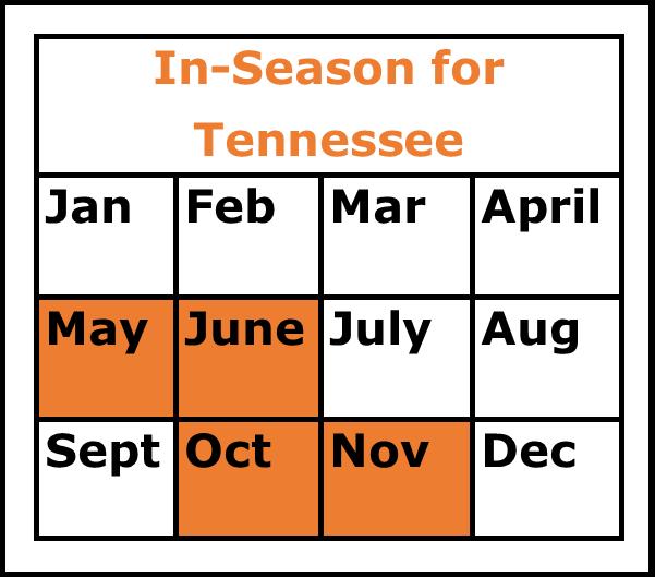 Season Chart Cabbage