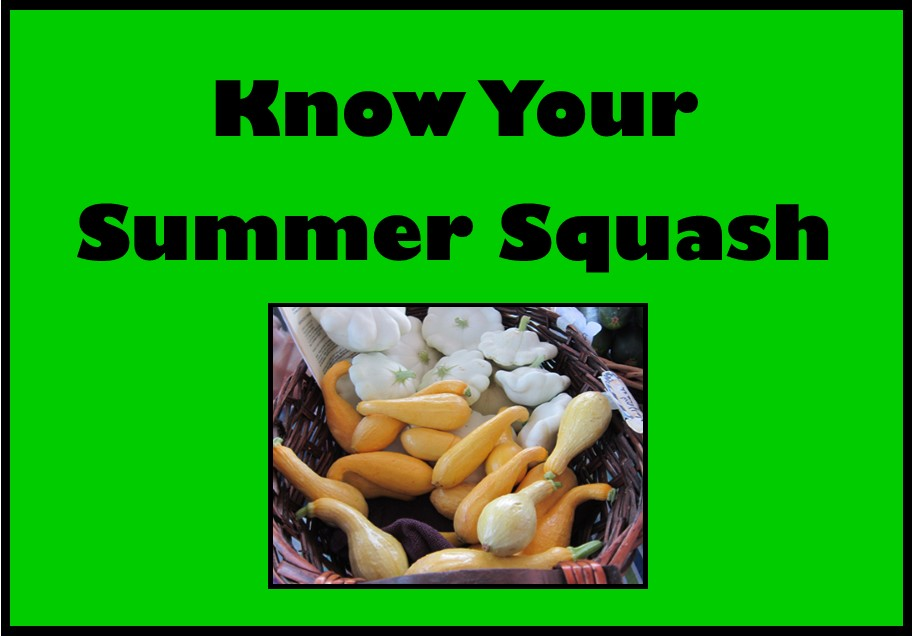Know Your Summer Squash Video Icon