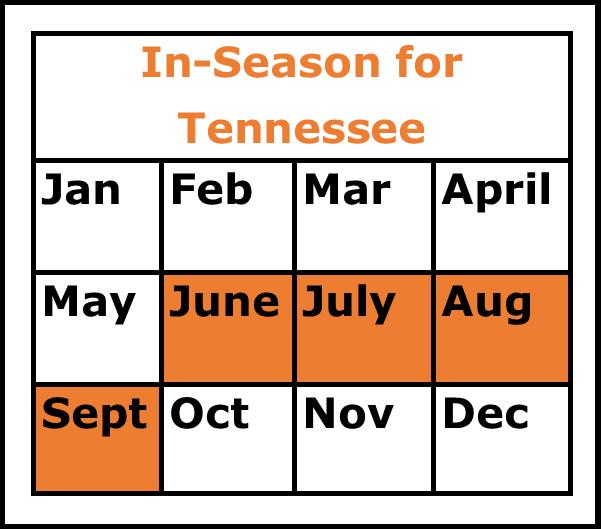 Season Chart for Summer Squash