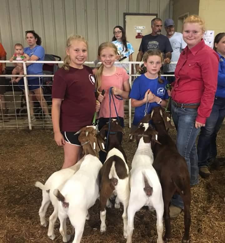 Goat contest