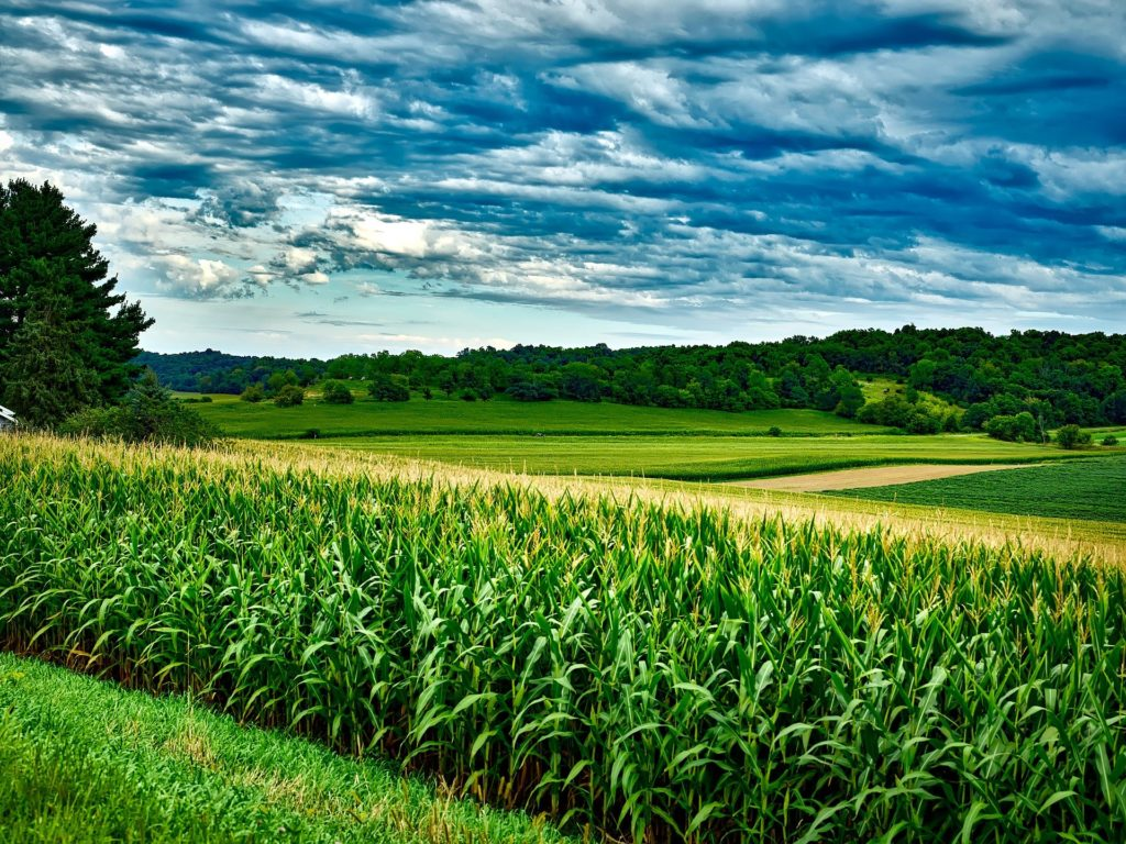 Photo of a field or crops and blue sky's